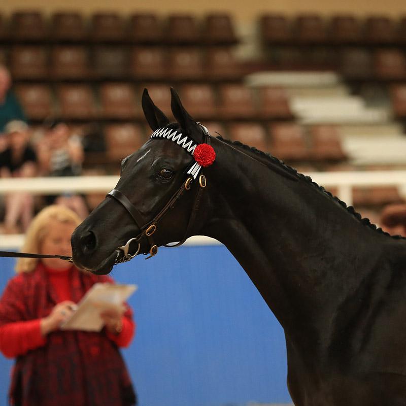 DSH Equine blog