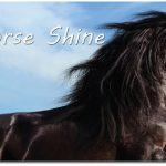 showpony horse colour